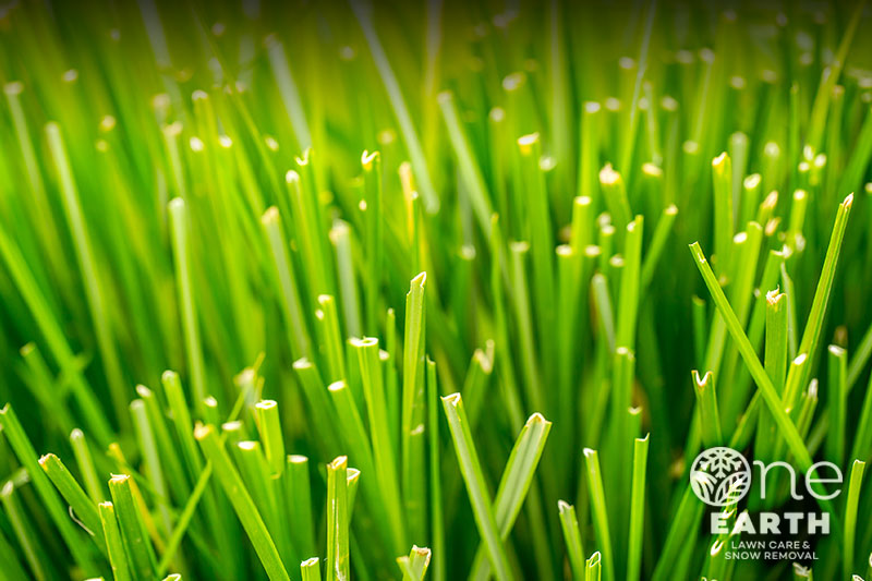 One_earth_lawn_services_background_d